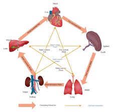 Chinese Medicine Elements Chart Diagrams About Tcm