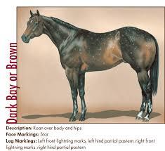 Whats In A Spot Appaloosa Horse Coat Genetics