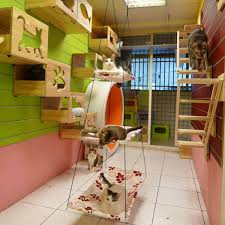 cat furniture wall mounted playground