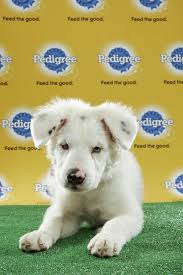 puppy bowl x halftime show.  Puppy In Puppy Bowl X Halftime Show