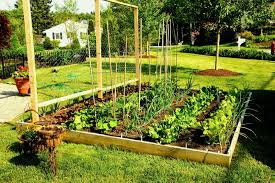 building raised vegetable garden beds plans fabulous beautiful in x planting for design