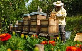 Αποτέλεσμα εικόνας για αιτησεις μελισσοκομων