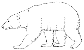 Small Picture Polar bear coloring pages walking ColoringStar
