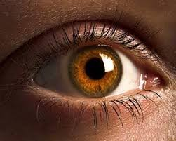 Image result for picture of the eye
