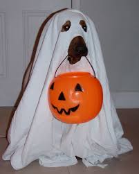 ghost costumes sheet 5 easy diy pet costumes you could create in your sleep petslady com