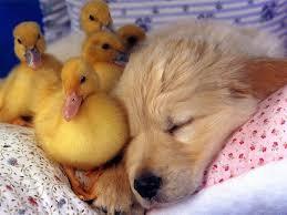 cute baby puppies sleeping. Unique Puppies Sleepingpuppy7 Inside Cute Baby Puppies Sleeping