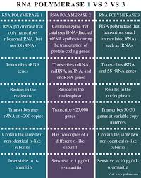 Similarities And Differences Between Mrna And Trna Chart Difference Between Rna Polymerase 1 2 And 3 Pediaa Com