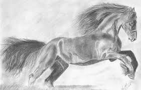 wild horse drawings in pencil. Beautiful Wild In Wild Horse Drawings Pencil M