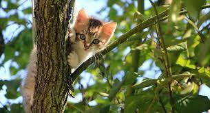 plants safe for cats australian plants