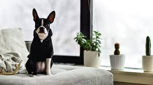 7 indoor plants safe for dog and cat