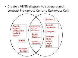 A Venn Diagram Of Prokaryotic And Eukaryotic Cells Cell Structure Review Ppt Video Online Download