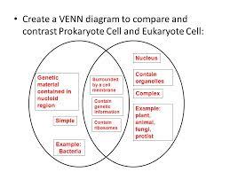 Compare Prokaryotic And Eukaryotic Cells Venn Diagram Prokaryotic Cells Vs Eukaryotic Cells Venn Diagram
