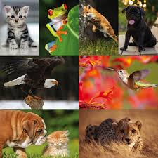 details about wildlife animals pets posters upto a1 size frames available