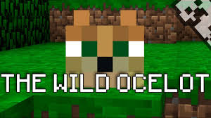 tame baby ocelot minecraft. Delighful Tame Intended Tame Baby Ocelot Minecraft G