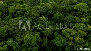 Texture Of Forest Background Of Forest Aerial Top View