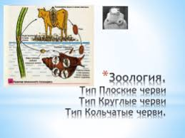 Примерные темы рефератов по истории науки Зоология 2