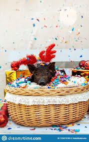 pig piglet little black basket wicker cute vietnamese breed new year happy tree decorations garland