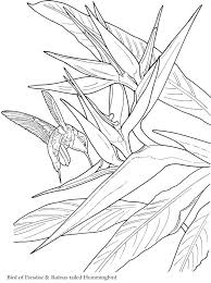 Small Picture 2330 best Drawings images on Pinterest Drawings Coloring books