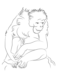 Small Picture Chimpanzee coloring pages Free Coloring Pages