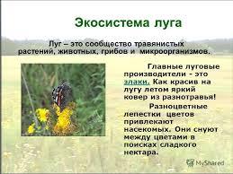 Презентация на тему Экосистемы луга леса и поля Автор Усачева  6 Экосистема луга