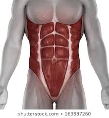 Abdominal Muscle Images Stock Photos Vectors Shutterstock