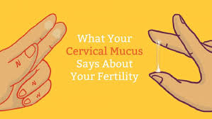 Ovulation Chart Pregnancy Signs Cervical Mucus Chart Know When Youre Fertile Mama Natural