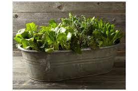 vintage galvanized bathtub planter