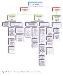 Biochemical Test Chart Identification True E Coli Identification Flowchart Bacteria Classification