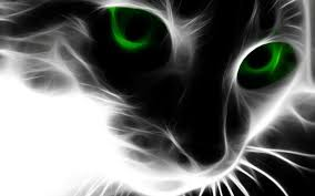 black cats with green eyes wallpaper. Unique Eyes Black Cat With Green Eyes Wallpaper 1600x1000PX   To Cats With F