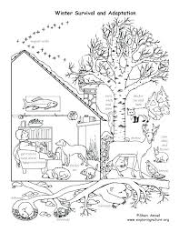 hibernating animals coloring pages free