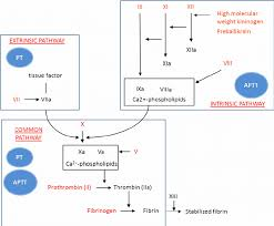 The Classical Coagulation Model Two Pathways Intrinsic And