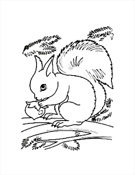 Flying Squirrel Coloring Book Red Squirrel Clip Art Flying