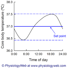 Physiology Graph Circadian Rhythm Of Core Body Temperature