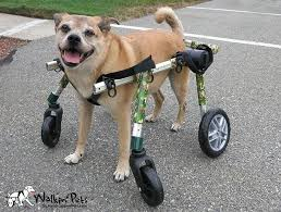 a donated dog wheelchair