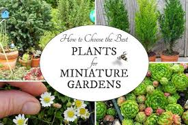 fairy garden miniatures. Want To Create A Miniature Garden With Living Plants? This Guide By Expert Janit Calvo Fairy Miniatures D