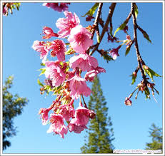 ผลการค้นหารูปภาพสำหรับ ดอกไม้ไทย