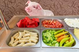 Mazuri Mini Pig Feeding Chart Pig Nutrition Pal Pig Advocates League