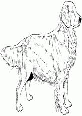 Small Picture Golden Retriever Coloring Pages Elegant Golden Retriever Puppy