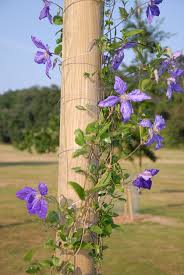 Pot Trellis Decorative Plants Pots Climbing Plant Support Garden HeartClimbing Plant Support