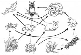 Food Chain Free Coloring Pages On Art Coloring Pages