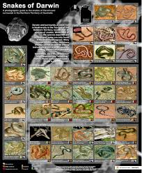 Australian Snake Chart Snakes Of The Top End Land For Wildlife Top End