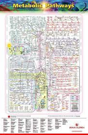 Iubmb Nicholson Metabolic Pathways Chart The Wonders Of The Human Cell The Metabolic Pathways Chart