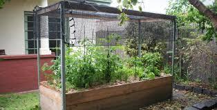 Small Picture 30 lovely Gardening Australia Vegetable Garden Design izvipicom