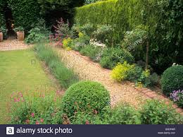 Small Picture Brick and gravel path hedge lawn Rosa The Fairy rose roses small