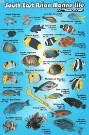 Australian Reef Fish Species Chart Fish Identification Fish Identification Specialty