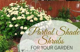 partial shade shrubs for your garden