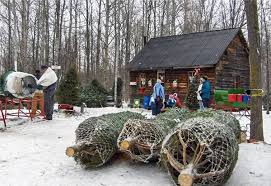 Each holiday season, tree farms in the Greater Toronto Area pile hay into  wagons and drive Christmas-tree cutters out into ...