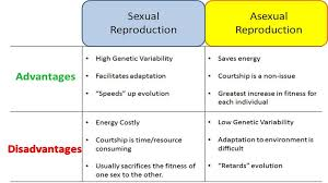 Flowchart For Sexual And Asexual Reproduction Science