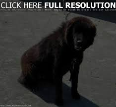 dog breeds under 15 pounds breed dogs picture dogs under 15 pounds photography dog show pictures 15 pounds 50 top best and the most por dog breeds of the