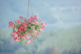 flowers beautiful landscape pastel fresh natural pink sky nature flower blossom branch leaf flora spring tree
